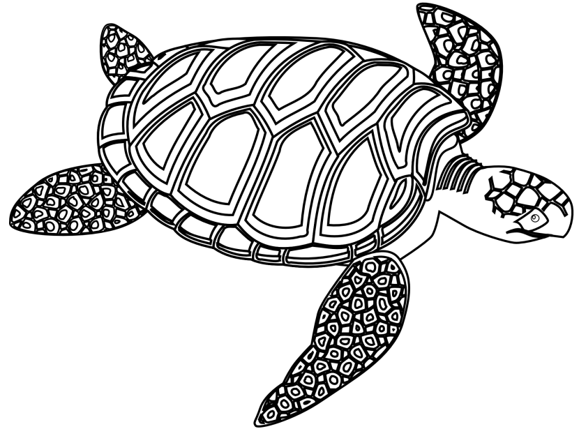 830x615 Turtle Outline Clipart Black And White