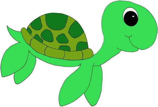 600x407 Drawn Turtle Clipart