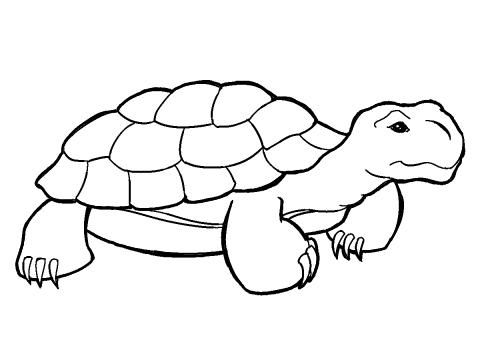 480x360 Tortoise Clip Art Clipart Panda