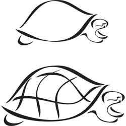 250x250 Turtle Outline Ink Amp Paint Outlines, Turtle And Tattoo