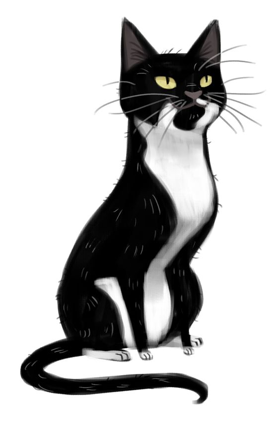 564x846 Tuxedo Cat clipart black and white