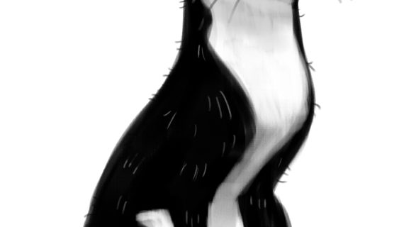 570x320 Black And White Cat Drawing Cat Clip Art Black And White Clipart