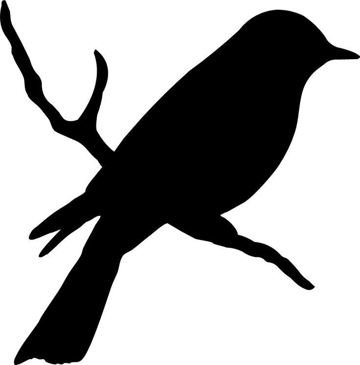 736x747 Bird On A Branch