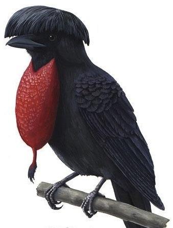 338x445 Umbrella Clipart Bird