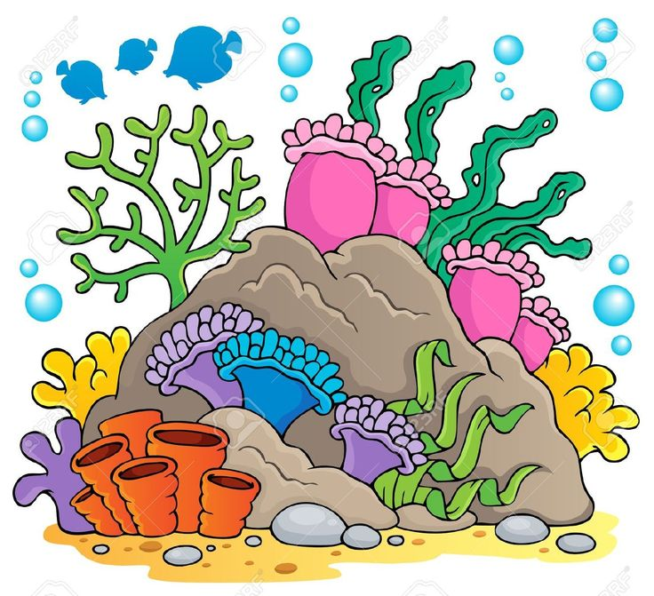 736x671 Reef Clipart Sea Bottom