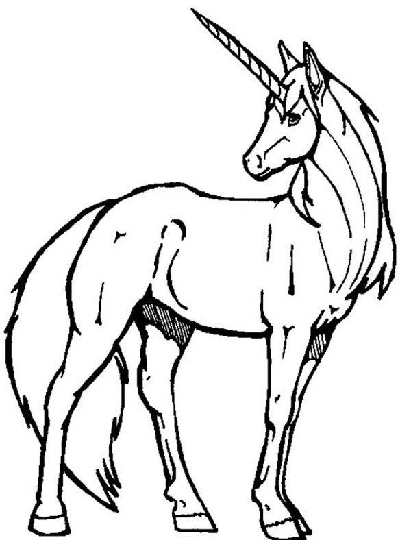 Unicorn realistic. Unicorns black and white