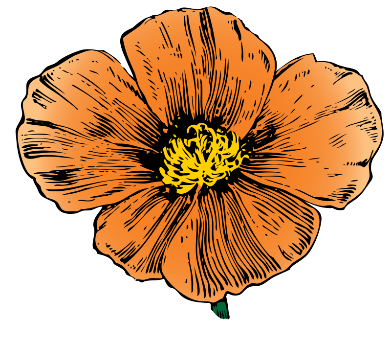 800x703 Free California Poppy Clip Art
