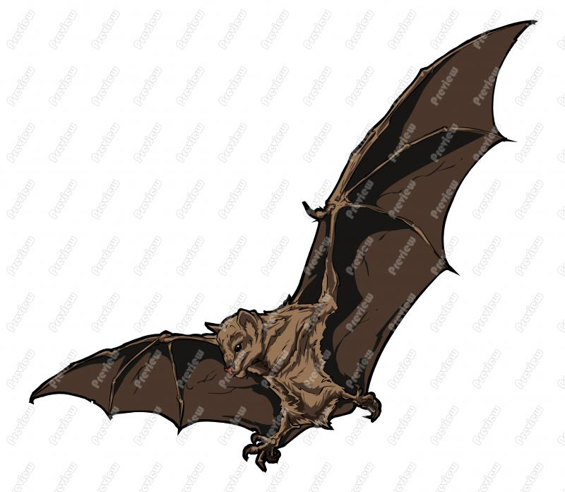 800x696 Bat Clipart Fruit Bat