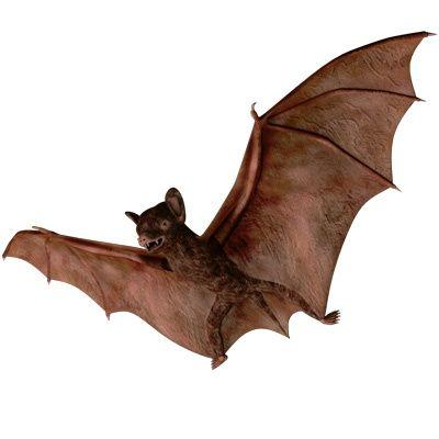 400x400 Obj Bats Mammals Wings