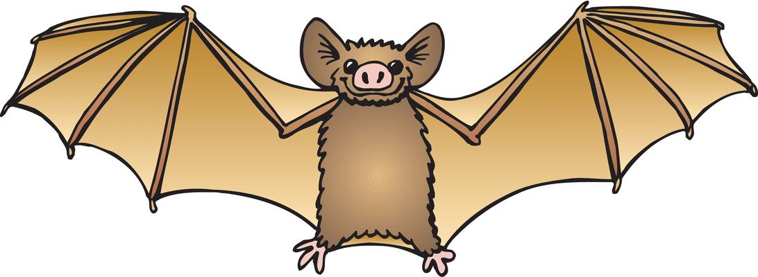 1092x400 Realistic Clipart Bat