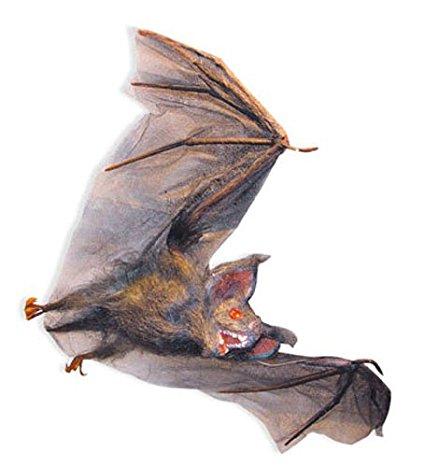 425x467 Hairy Flying Vampire Bat Halloween Decorations