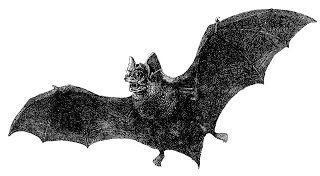 320x176 The Vampire Bat Horror Royalty Horror