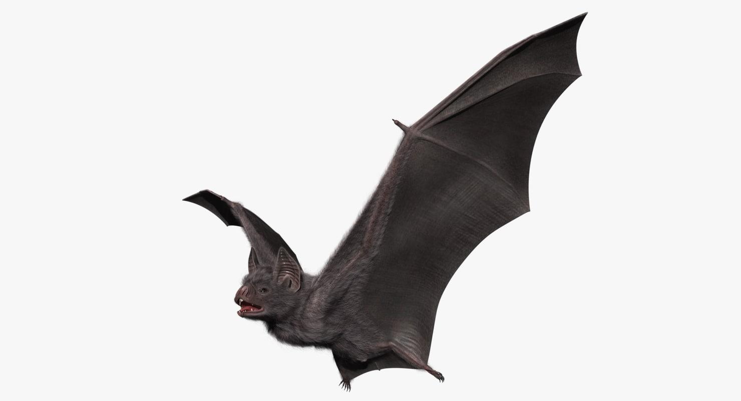 1480x800 Bat 3d Model