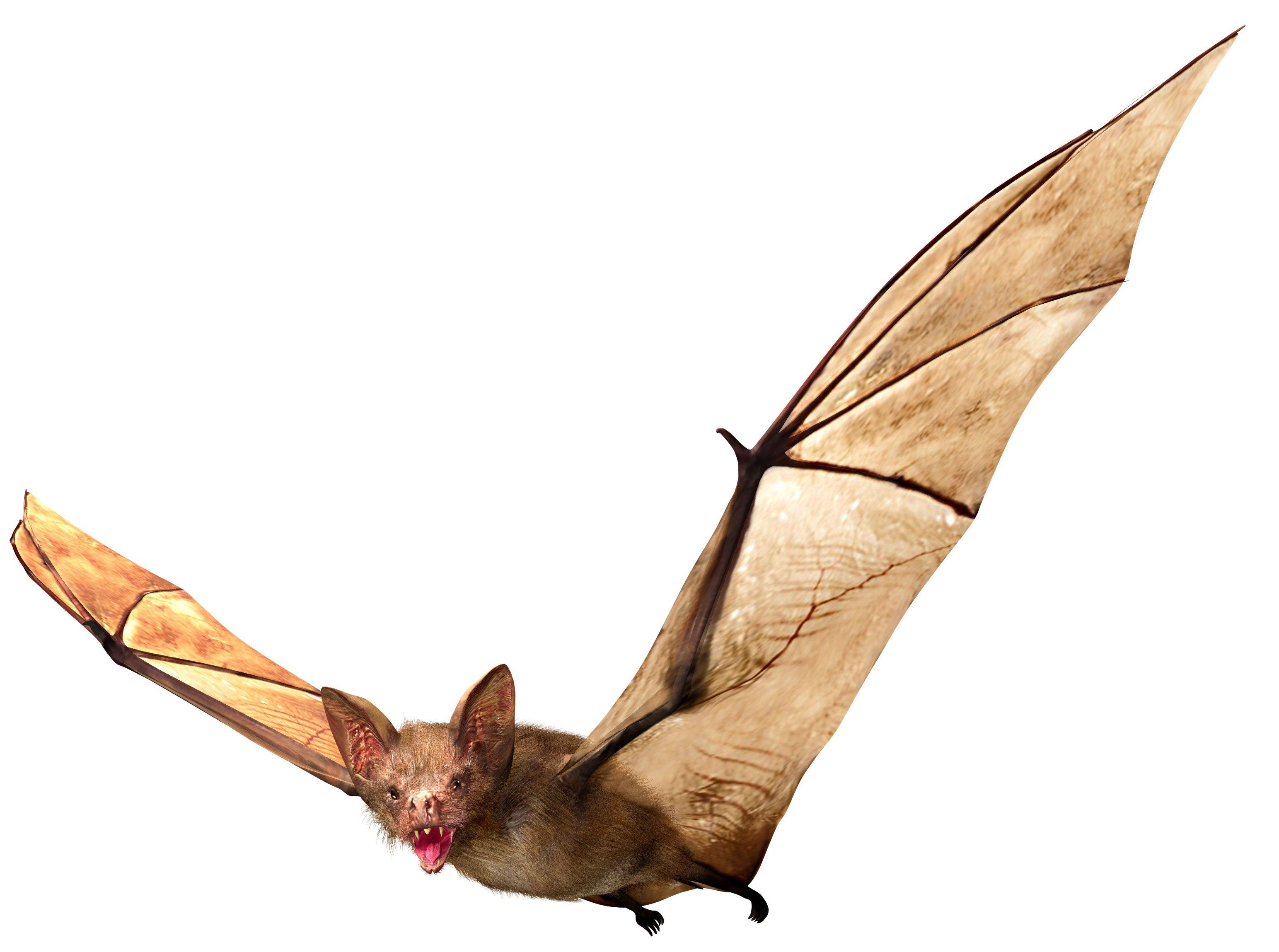 3087x2298 Bat Removal Services