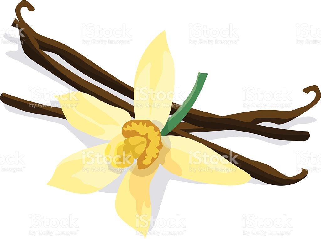 1024x763 Vanilla Clipart Vanilla Bean