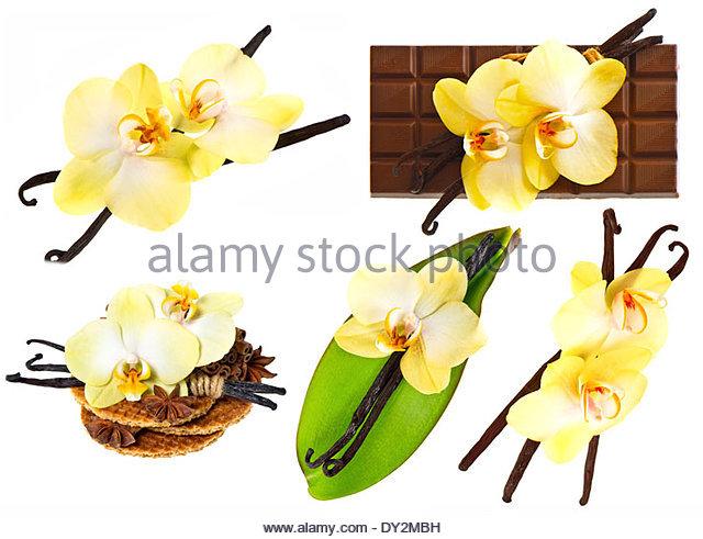 640x491 Vanilla Flower Leaf Stock Photos Amp Vanilla Flower Leaf Stock