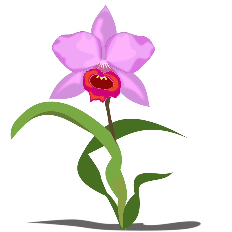800x800 Orchid Flower Clipart