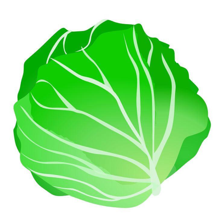 736x736 Cabbage Clipart Fruits And Vegetable