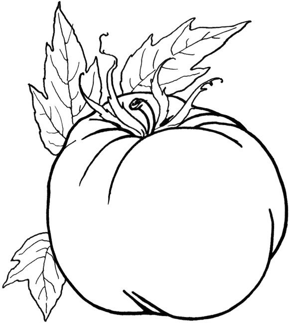 580x648 Preschool Coloring Pages Vegetables Walking Vegetables Coloring