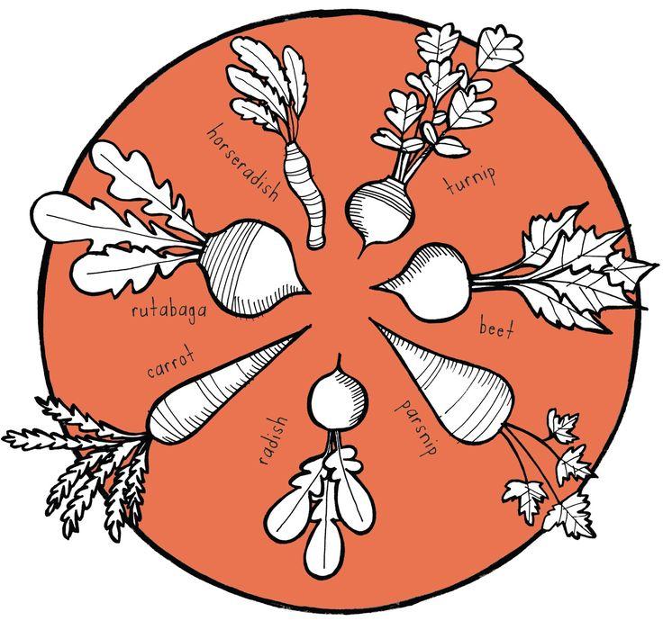 736x690 Fun Drawings Of Root Vegetables Designs Fun