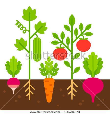 449x470 Garden Clipart Vegetable Plant