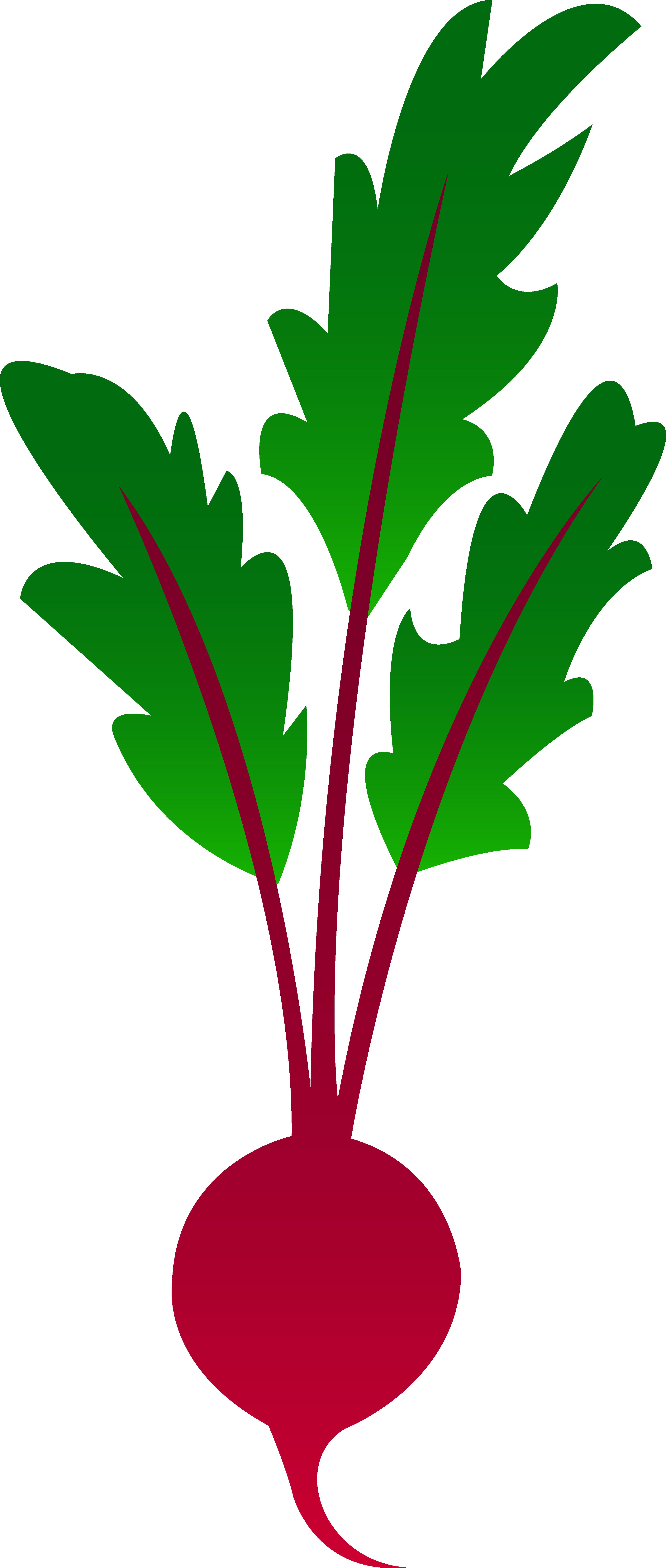 3470x8171 Red Garden Beet