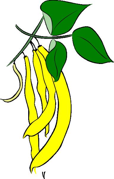 384x599 Yellow French Bean Clip Art