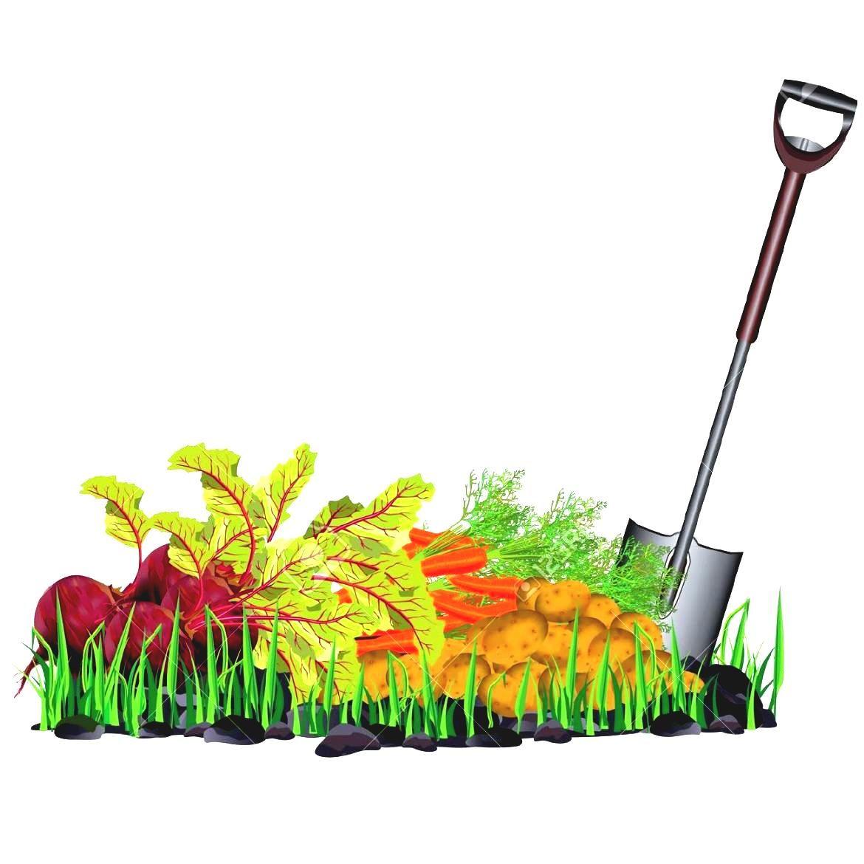 1170x1170 Background Clipart Vegetable Garden