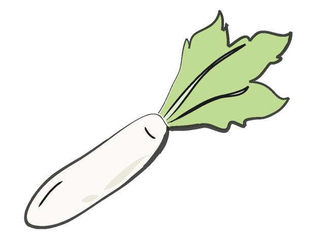 640x480 Radish Radish Food Illustration Free Clip Art Material