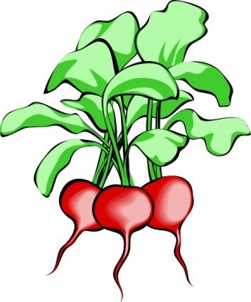 353x425 Vegetable Clipart Cute Vegetable Clipart