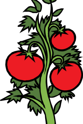 320x480 Vegetable Clipart Vegetable Patch