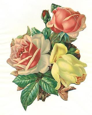 Victorian Rose Pictures