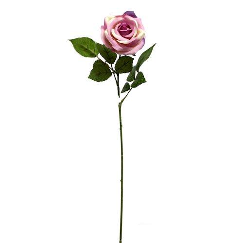 500x500 Roses Baldocks Direct, The Merchant On Queen Street