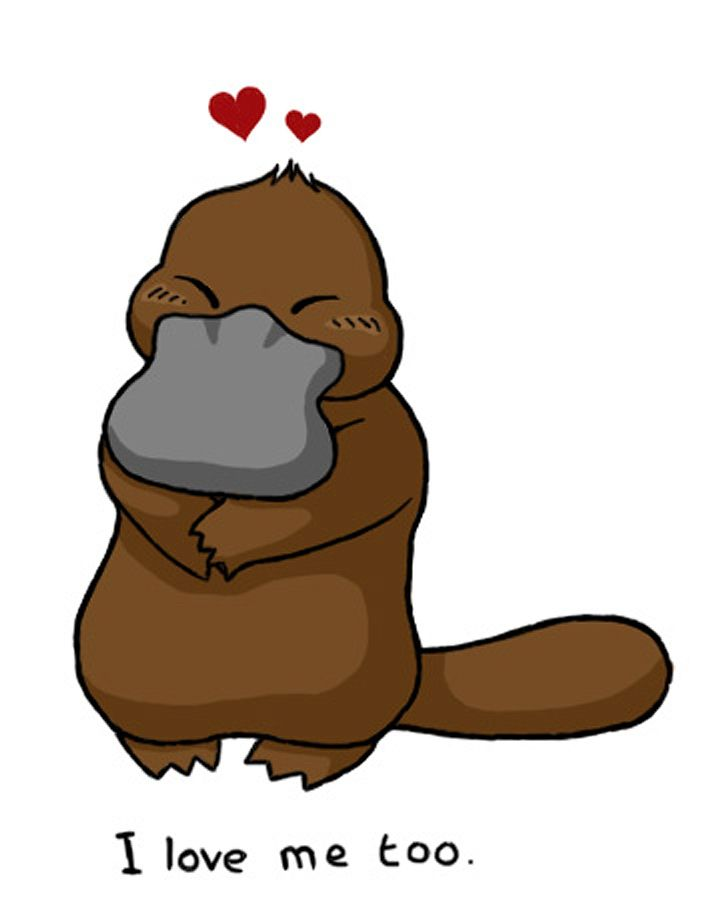 715x900 Images About Platypus On Baby Toys Videos Of Clip Art