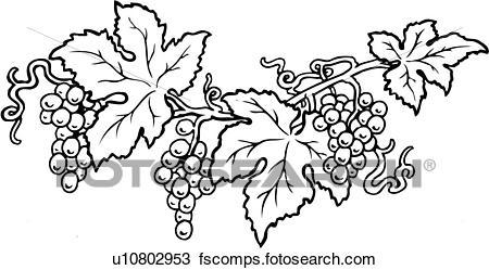 450x249 Clipart Of Grape, Grapes, Vine, Grapevine, Fruit, Lineart