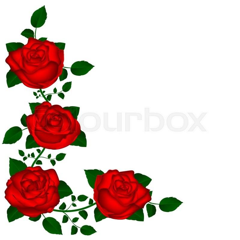 800x800 Vine Of Red Roses Vine Of Red Roses Vector Illustration Of Flowers