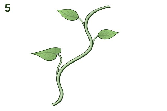 Vine With Leaves