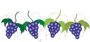 300x140 Grapes Clipart Grape Vine