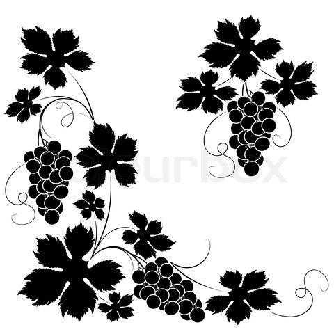 Vines Images
