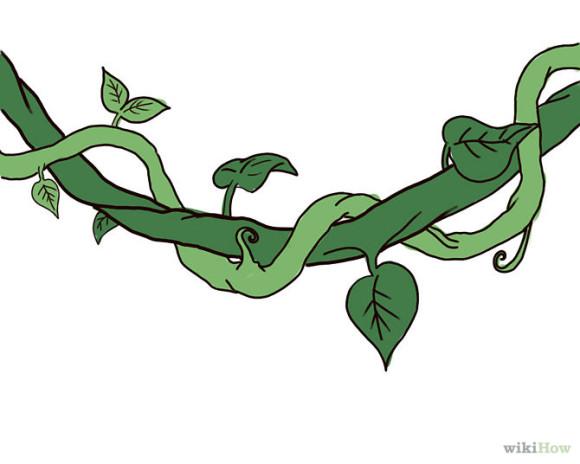 580x464 Jungle Vines Clipart