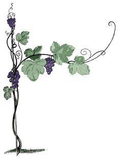 236x312 Black And White Vine Clip Art Grapevine Clip Art