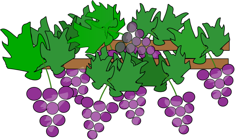 800x478 Grapes And Wine Clipart