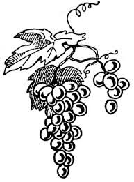 193x261 Vine And Berries Clip Art Free Vector For Free Download About (3