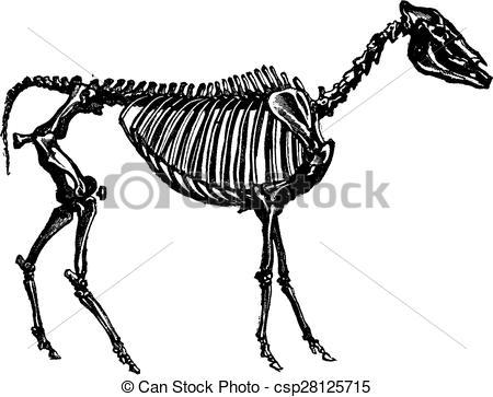 450x363 Engraving Clipart Animal Skeleton