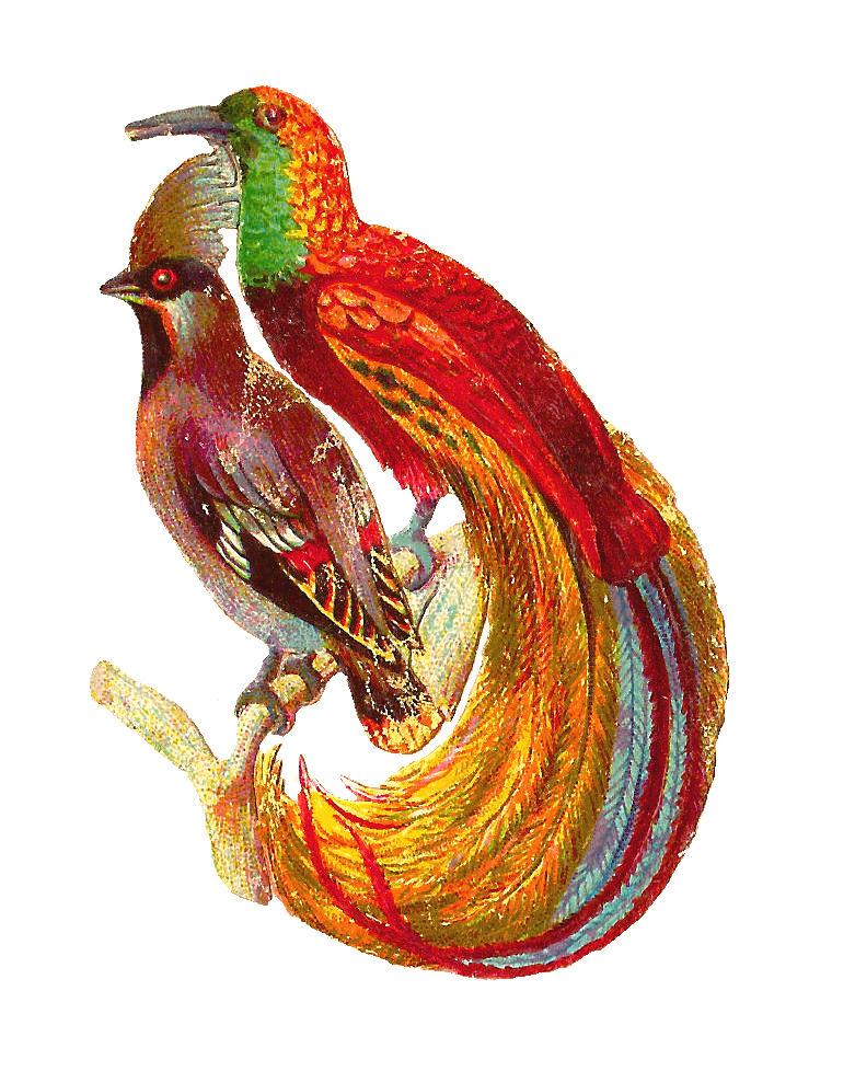 781x989 Antique Images Free Bird Clip Art Antique Bird Clip Art