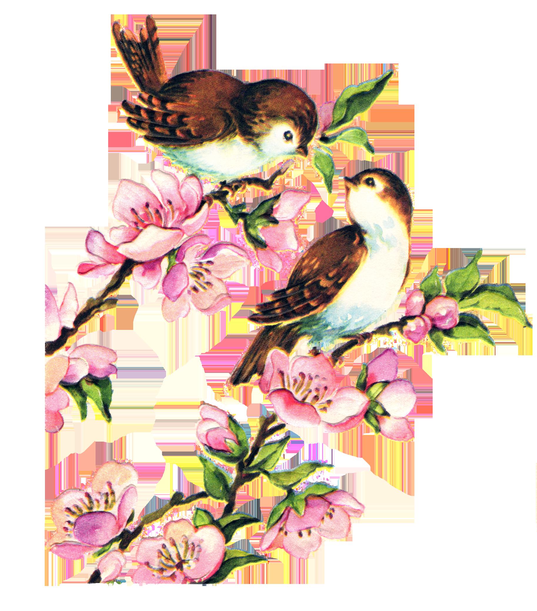 1827x2079 Free Vintage Bird Collage Sheet