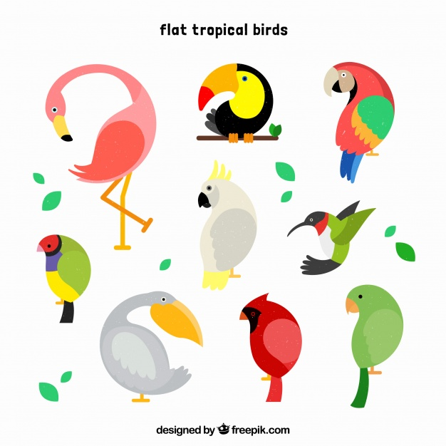 626x626 Love Birds Vectors, Photos And Psd Files Free Download