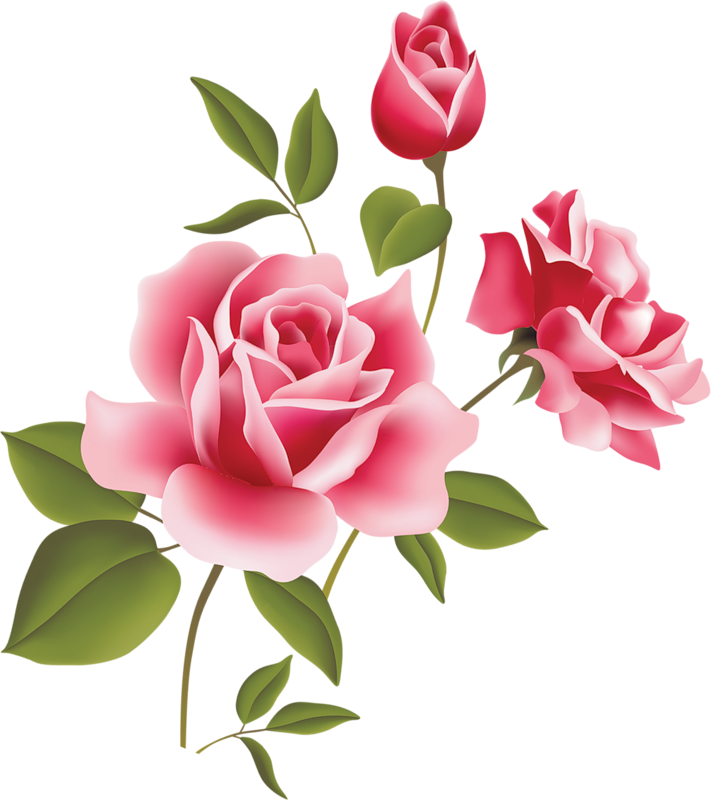 711x800 Pink Rose Art Picture Clipart