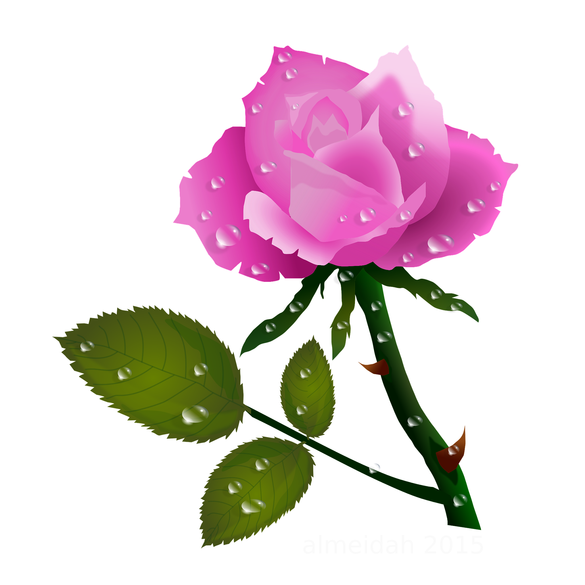 1920x1920 Pink Rose With Water Drops 1920x1920 Clip Art Everyday For Cards