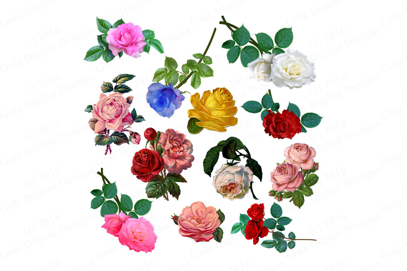 1300x866 Prickly Rose Clipart